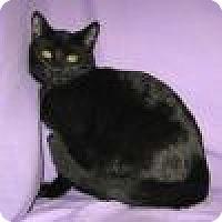 Adopt A Pet :: Junior - Powell, OH