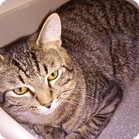 Adopt A Pet :: Love - Franklin, NH