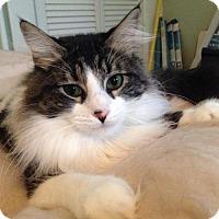 Adopt A Pet :: Emily - San Antonio, TX