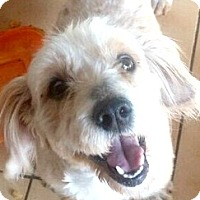 Adopt A Pet :: Mikey-ADOPTION PENDING - Boulder, CO