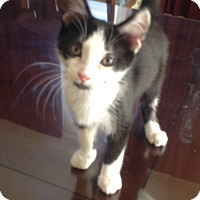 Adopt A Pet :: Lee - Covington, KY