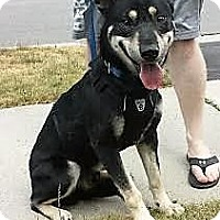 Adopt A Pet :: Osmo - Milton, ON