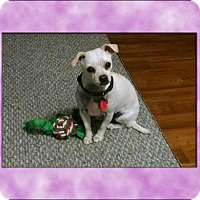 Adopt A Pet :: Lulu - Genoa City, WI