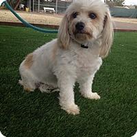 Adopt A Pet :: Max - Temecula, CA