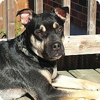 Rottweiler/Boxer Mix Dog for adoption in Peterborough, Ontario - DAX