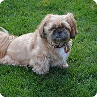 Adopt A Pet :: Maggie - Boise, ID