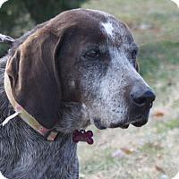 Adopt A Pet :: Sally - Staunton, VA