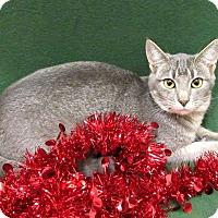 Adopt A Pet :: YULE - Lexington, NC