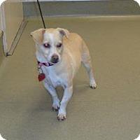 Adopt A Pet :: Lexy - Wildomar, CA
