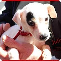 Adopt A Pet :: Julianne - Simi Valley, CA