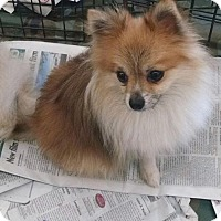 Adopt A Pet :: Sammy - Pembroke, GA