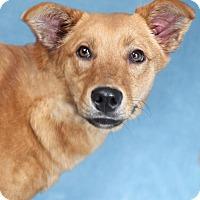 Adopt A Pet :: Garbo - Encinitas, CA