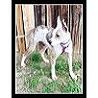 Adopt A Pet :: Pesto - Phoenix, AZ