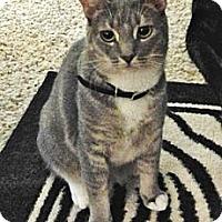 Adopt A Pet :: Li'l Gracie - Davis, CA