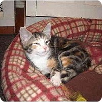 Adopt A Pet :: Savanah - Riverside, RI