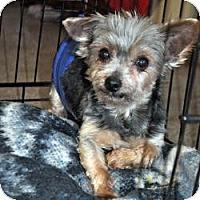 Adopt A Pet :: Sam - Redding, CA