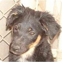 Adopt A Pet :: Celia - Scottsdale, AZ