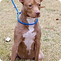 Adopt A Pet :: Prissy - Arlington, TN