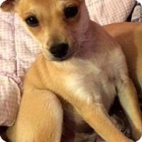 Adopt A Pet :: Malcolm - West Richland, WA