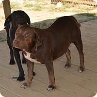 Adopt A Pet :: Leon - Grenada, MS