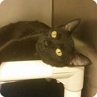 Adopt A Pet :: Petco - Triadelphia, WV