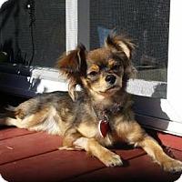 Adopt A Pet :: Minu - Beverly Hills, CA