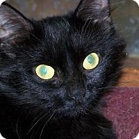 Adopt A Pet :: Penelope - Chenango Forks, NY