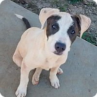 Adopt A Pet :: Patches - Andalusia, AL