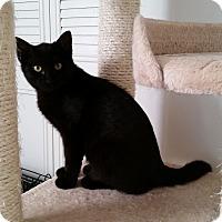 Adopt A Pet :: Velvet - Turnersville, NJ