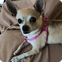 Adopt A Pet :: Anabel - Henderson, NV