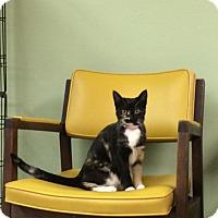 Adopt A Pet :: Andromeda - Medina, OH