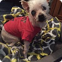 Adopt A Pet :: PJ - LEXINGTON, KY
