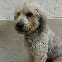 Adopt A Pet :: ZZ-Taepoong *courtesy post - Rancho Santa Margarita, CA