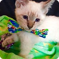 Adopt A Pet :: Benji - Cerritos, CA