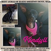 Adopt A Pet :: Kindyl - Hearne, TX