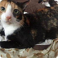 Adopt A Pet :: Penny - Woodstock, ON