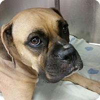 Adopt A Pet :: Lark - Austin, TX