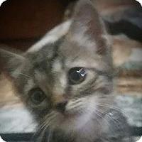 Adopt A Pet :: Erma - corinne, UT