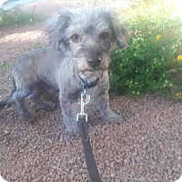 Adopt A Pet :: Bubby - Las Vegas, NV