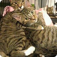 Adopt A Pet :: brother n sis - Whitestone, NY
