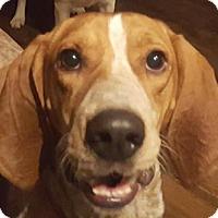 Adopt A Pet :: Melanie - Rockville, MD