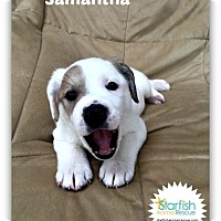 Adopt A Pet :: Samantha - Plainfield, IL