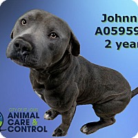 Adopt A Pet :: Johnnie - St. Louis, MO