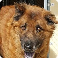 Adopt A Pet :: ZION - Eastsound, WA