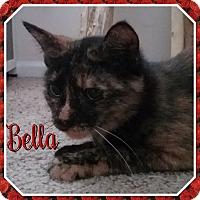 Calico Cat for adoption in Cedar Springs, Michigan - Bella