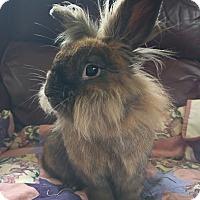 Adopt A Pet :: Noel - Livermore, CA