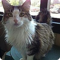 Adopt A Pet :: Maddee - Topeka, KS