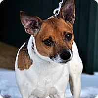 Adopt A Pet :: Koby - Rhinebeck, NY