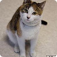 Adopt A Pet :: Alice - Lancaster, MA