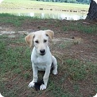Adopt A Pet :: Norris~Ridgefield, CT - Adamsville, TN